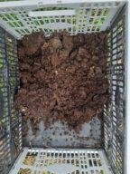 leaf mulch1